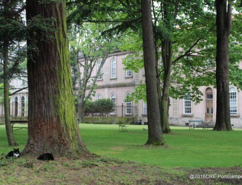 Árvores que cuidam de nós
