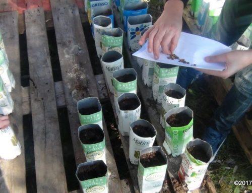 A semente foi lançada no AE Coronado e Castro