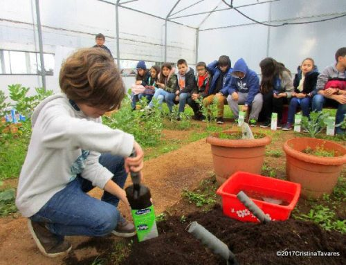 Conhecer e semear a floresta nativa