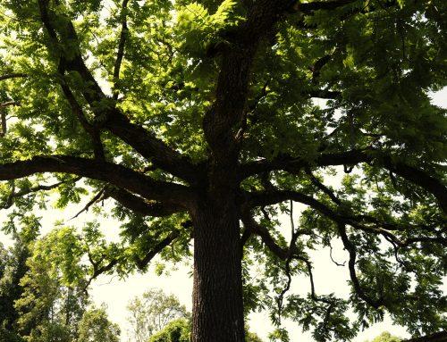 Casa da Portela: o oásis da nogueira-negra