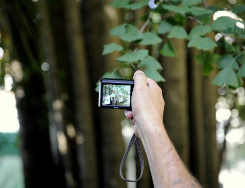 Árvores de Cedofeita: segredos bem guardados