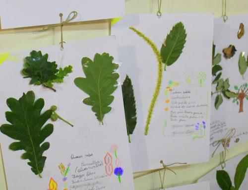 Fonte da Moura constrói o herbário do Parque da Cidade