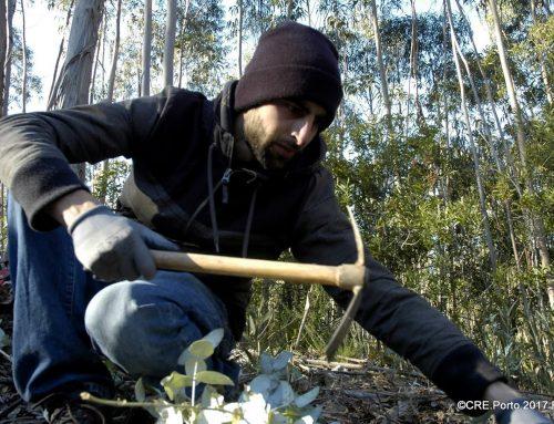 """""""Plantar uma Árvore"""" colabora em área do FUTURO em Valongo"""
