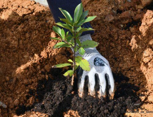Nasce um novo bosque nativo em Foz do Sousa