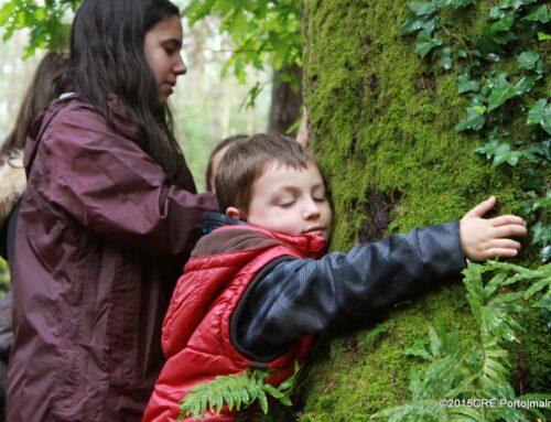 Balanço das Rotas das Árvores e Florestas
