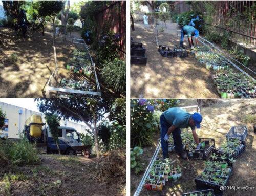 Plantas da EB do Castro seguem para o Viveiro municipal