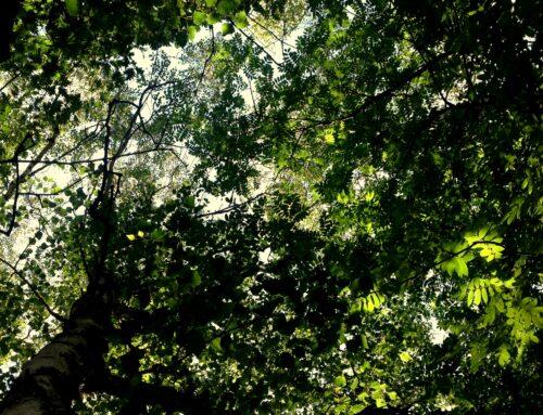 Dá que pensar | Biodiversidade aumenta a produtividade