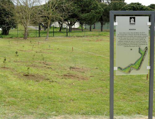 Parque de Ponte de Moreira: uma manhã muito VIP