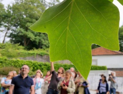 Árvores do Romântico: mais de 250 anos de história