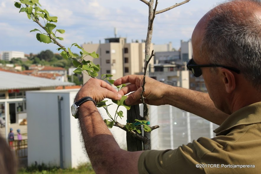 EB2,3 de Rio Tinto: uma escola mais verde e feliz