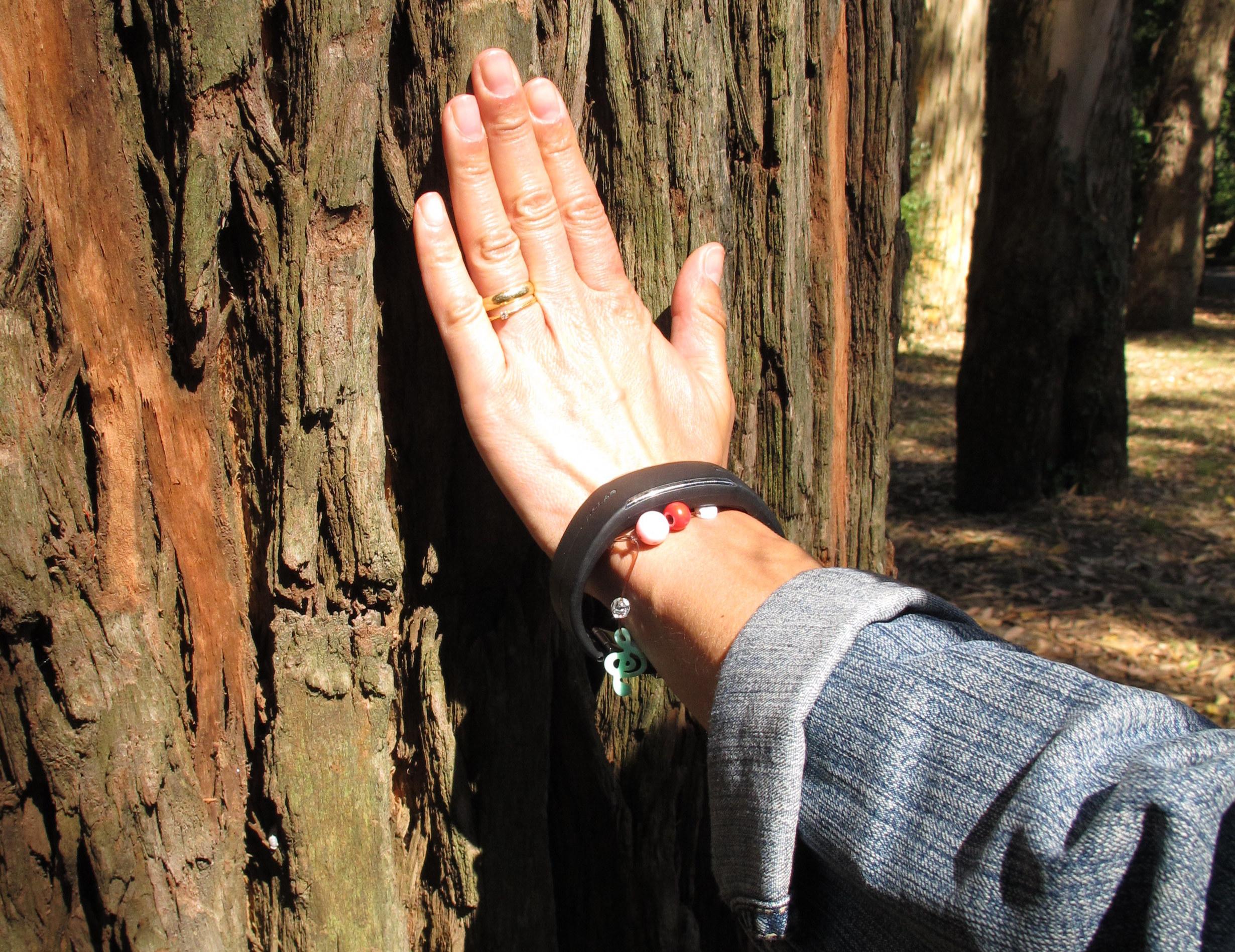 Árvores de Campanhã e Santo Ildefonso: raridades na cidade