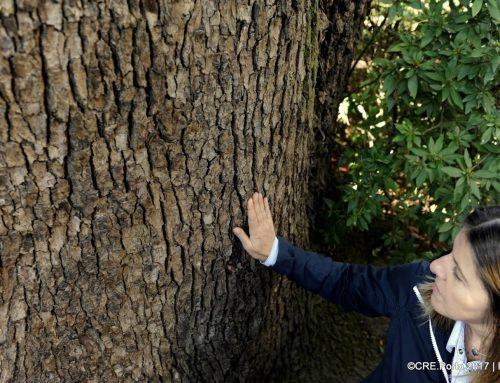 Árvores da Arrábida: gigantes com vista para o Douro