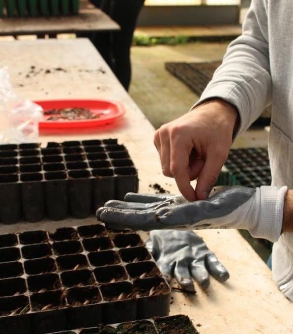 2019 com novas sementeiras e novas técnicas no Viveiro do FUTURO