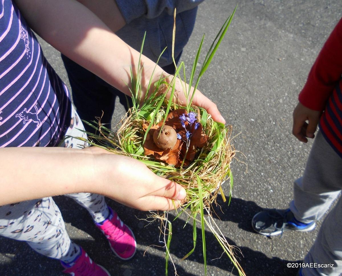 As formas do jardim da escola e os seus ninhos!