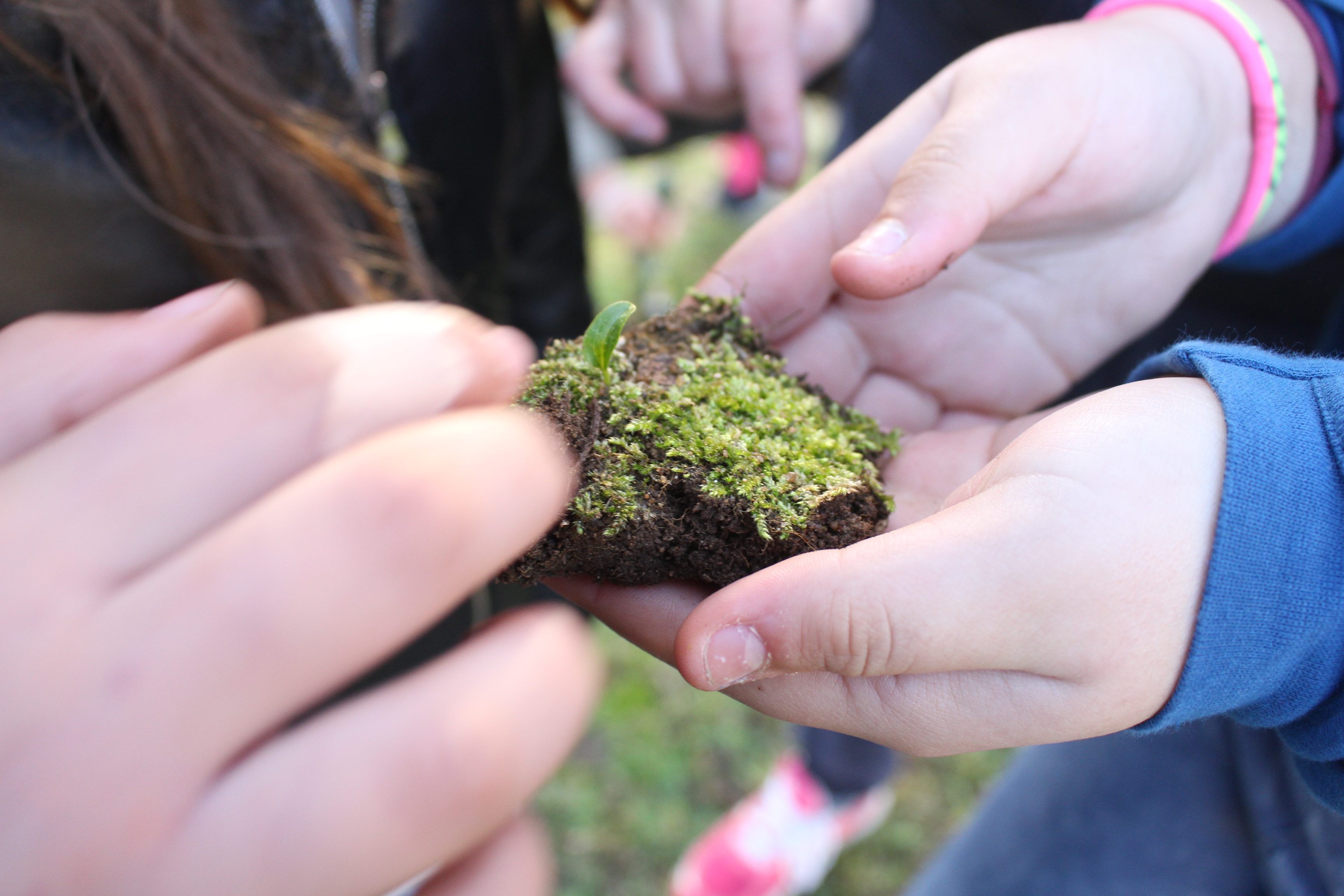 Escolas provam que a Natureza é a melhor sala de aula
