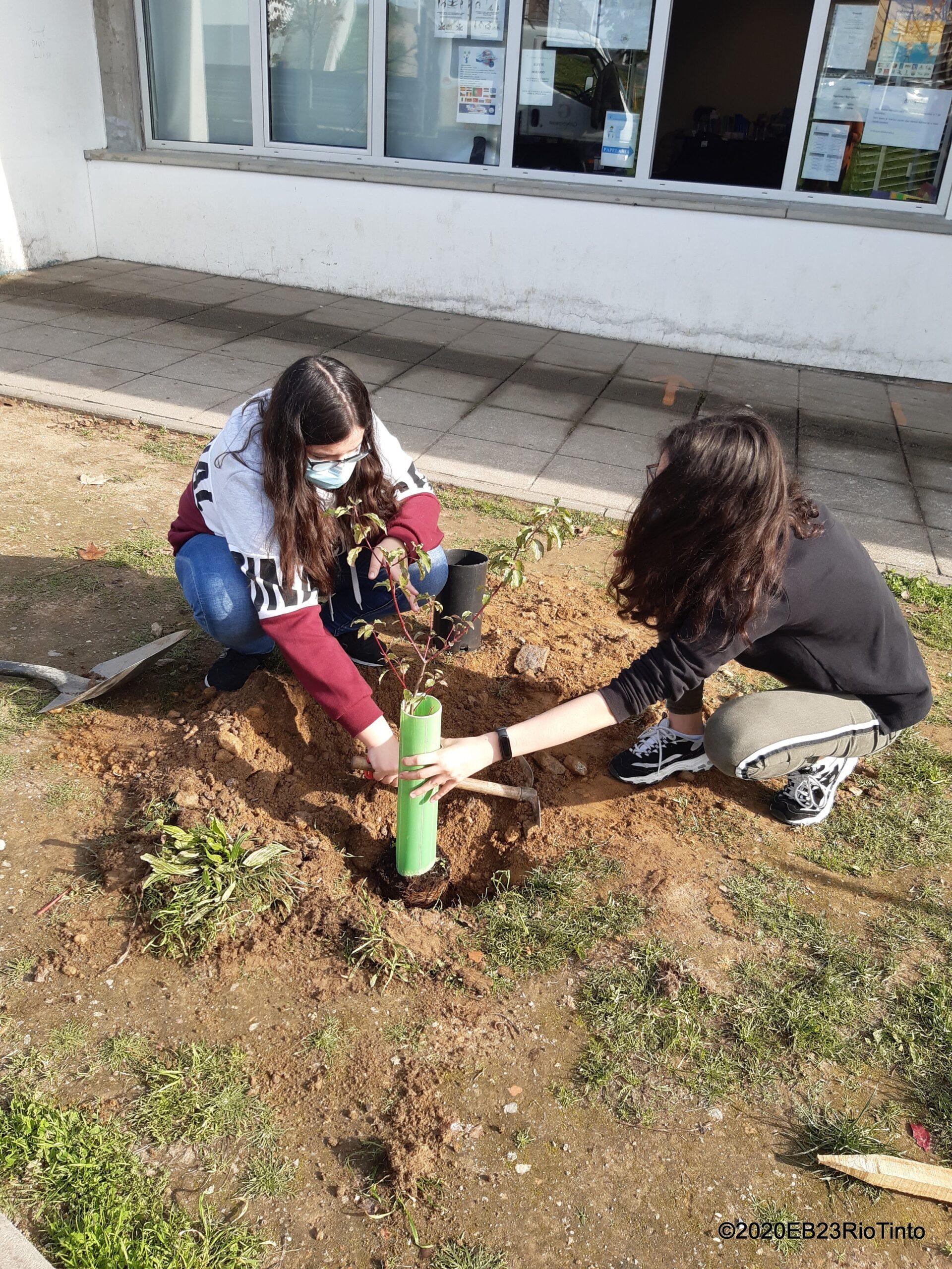 EB 2,3 de Rio tinto: uma escola preocupada com a floresta nativa